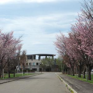 【桜名所】運気上昇!ロケットお守りのある大樹神社隣りの桜スポット「柏林公園」