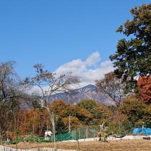八ヶ岳南麓冬支度 ありがとうミニトマト