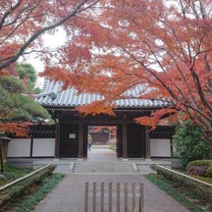杉並の名刹観泉寺で紅葉を愛でる