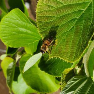八ヶ岳南麓の昆虫たち(2020年5月の記録)