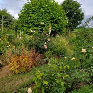 ブドウの苗を植える