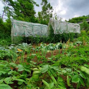 7月の野菜2020 今年はキノコが主役か