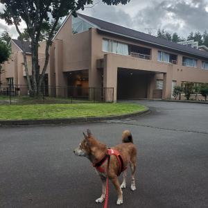 愛犬と泊まれる宿「ゆとりろ蓼科ホテル」