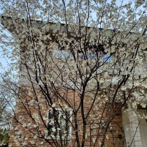 桜がなくても春爛漫2021