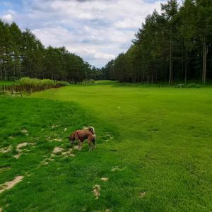 新たな犬の楽園 八ヶ岳芝生広場(清里丘の公園内)へ