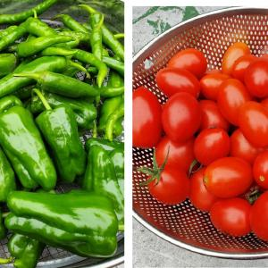 夏野菜最後の収穫2021