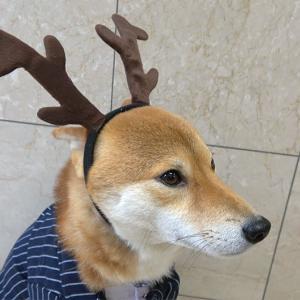 亜門さん、予想外のクリスマス