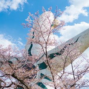 大阪の桜の名所 万博記念公園