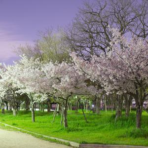 西淀川区公園桜マップ(後編)