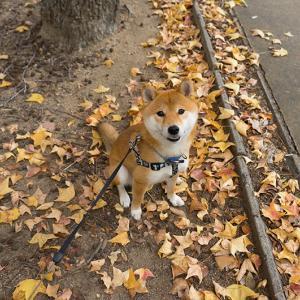亜門さんと歩く紅葉の遊歩道2018