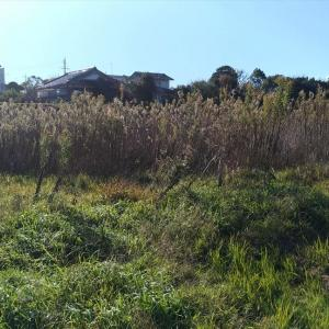 令和元年最後の大型草刈り ~自走式草刈り機はやっぱりスゴイ!~