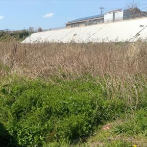 久々の大型除草と粗大ゴミ処分をしました