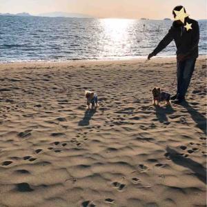 浜辺おさんぽ