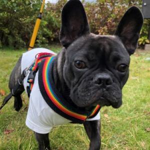 『Dog indexのレッスンは無理が無く、継続しやすい内容で方法が具体的』
