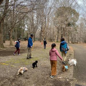 本当に犬が好きなら、散歩は面倒ではないはず!