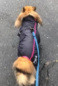 Dog indexスタッフブログ  「散歩に出るタイミングについて。」