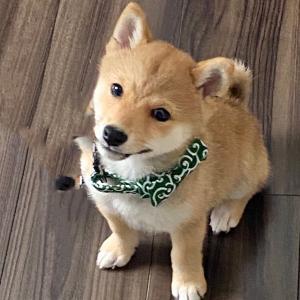 愛犬をより早く理解する方法