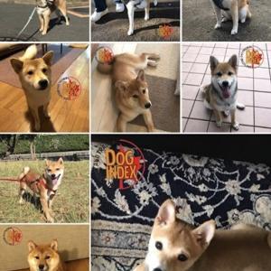 日本犬の祭典【ZIPANG2019】お得な前売り券スタート!