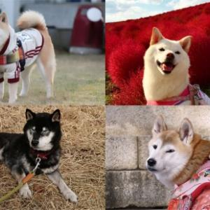 日本犬の祭典【ZIPANG2020】11:00より「ご長寿犬表彰式 ~長生きの秘訣を聞いてみよう☆~」