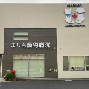 まりも動物病院さん パピーパーティースタート 東京都東久留米市