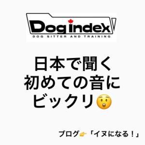 日本で聞いた初めての音