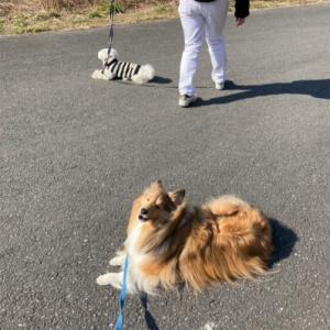 Dog indexスタッフブログ  「どのくらいトレーニングしたらできる?」