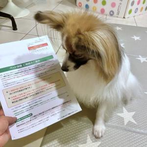 Dog indexスタッフブログ  「保険か貯金か」