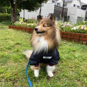 Dog indexスタッフブログ  「暑さや雨お散歩どうする?問題。」