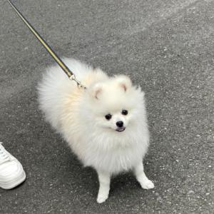 はじめて犬を飼う