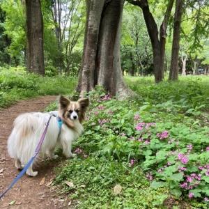 Dog indexスタッフブログ  「ドッグトレーニングは、その時その犬とオーナーさんに必要なことをやる。 」