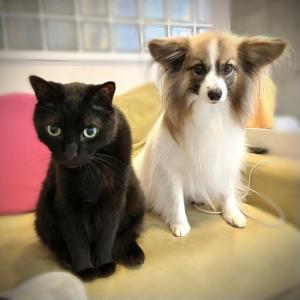 Dog indexスタッフブログ  「多頭飼いと年齢差」