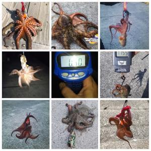 タコ釣り近況報告(コロナ、感染してませんよ!)