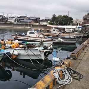 船タコ釣りショートゲーム(へぐり渡船)