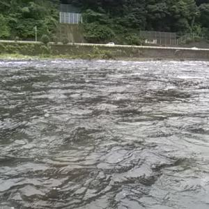 【郡上14回】引き水でウハウハの予定が大誤算!?