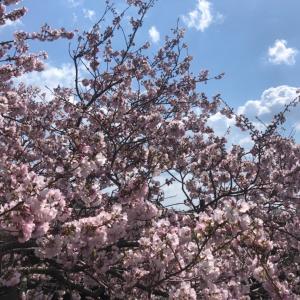 春☆感☆ジョグ♫