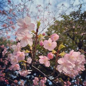 咲顔(えがお)の3つの力