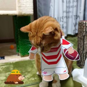 猫も強制的にラグビー日本代表応援!