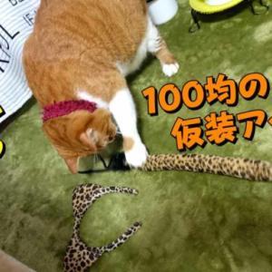 100均アイテムで猫から豹へ