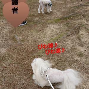 琵琶湖~♪