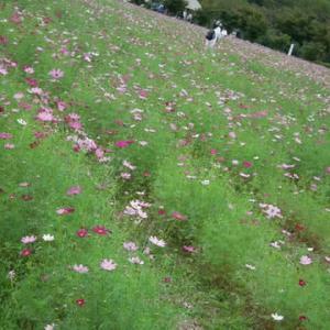 秋の花とめんま2。
