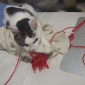 めんまと、毛糸と毛布ラブラブ。