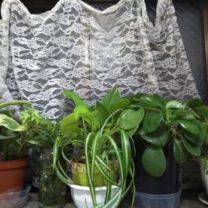室内の植物とめんま。
