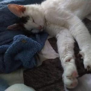 めんま、にいちゃん枕ですやすや。