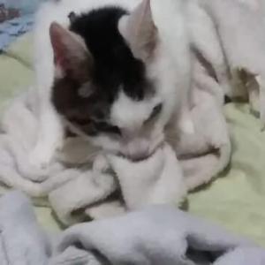 毛布とめんまと執着と。