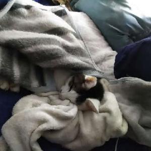 めんま、毛布にくるまってます。