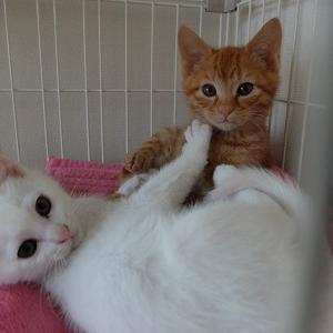 当選2件と保護猫さんが下痢・嘔吐(涙)とイオングループのキャンペーン情報