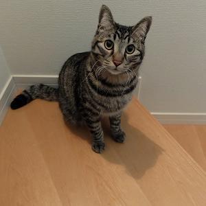 保護猫の去勢手術とアピタ・ピアゴの懸賞情報 明日スタート!純金当たる