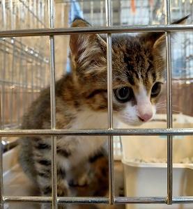 当選1件とYストアの懸賞情報 保護猫ツナ、トライアルが決まりました!