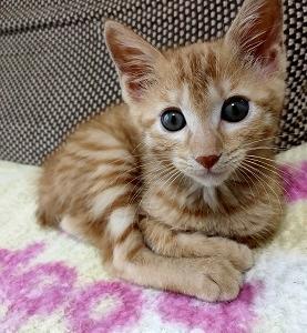保護猫・茶トラメスのホップちゃんとスギ薬局の懸賞・キャンペーン情報