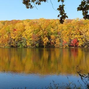 秋の西岡公園・紅葉とオシドリの美しいコラボレーション☆